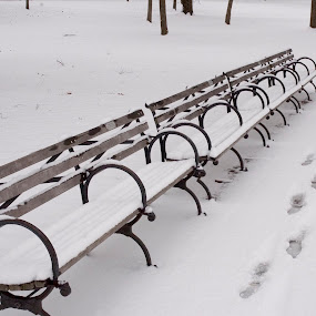 Snowy day at the park by Rob Donner - Buildings & Architecture Other Exteriors ( winter, parks, snowscapes )
