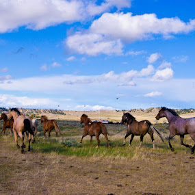 Running to no where by Mw C - Animals Horses
