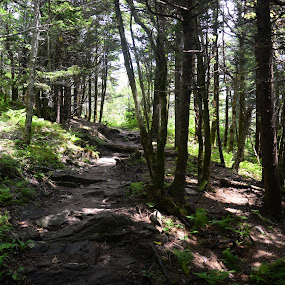 trail by Sabastian L - Landscapes Forests ( nature, trees, usa, hiking, north carolina )