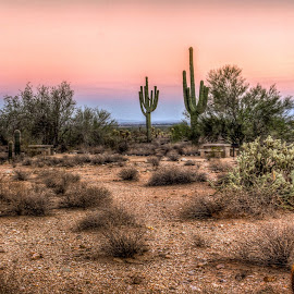 Sunset in The White Tank Mountains by Anthony Sapone - Landscapes Deserts ( sky, desert, sunset, arizona, cactus )