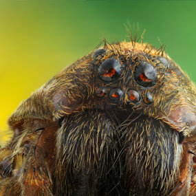 The old Lady by Ferhan Mazllami - Animals Insects & Spiders ( sorrow, stacked, detail, old, sad, green, mood, insect, macro, nature, tired, lady, bug, spider, small, closeup, eye )