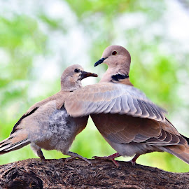 by M & D Photography - Animals Birds