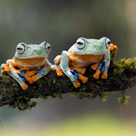 Nobar by Kurito Afsheen - Animals Amphibians