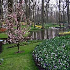 S+pring at Holland by João Ascenso - City,  Street & Park  City Parks ( holland, amesterdam, garden )