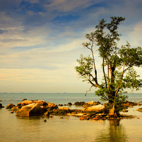 Lonely Tree by Mario Wibowo - Nature Up Close Flowers - 2011-2013 ( indonesia, mario wibowo, foto escape, nikon, fotorio, batam )