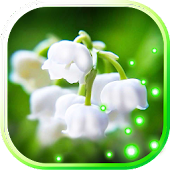 App Lily May live wallpaper apk for kindle fire