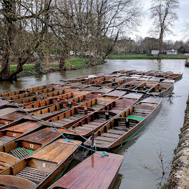 Botanical Gardens, Oxford by Vanda Kopányi - City,  Street & Park  City Parks ( oxford, boathouse, charwell, garden, botanical gardens, boats, river, park )