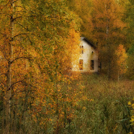 Old house in forest by Marina Erkenius - Landscapes Forests ( colour, sweden, nature, moment, capture, photoshot, nikon )