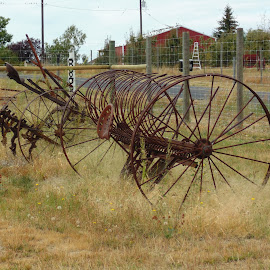 Old plows by Tracy Halman - Transportation Other ( old, old plows, horse drawn, antiques,  )