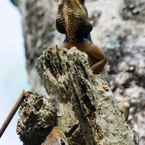 || Curiosity || by Indra Maji - Animals Reptiles