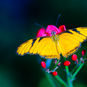by Maria Fotografia - Nature Up Close Flowers - 2011-2013 ( butterfly, nature )