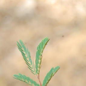 Close ups of leaves by Sagar Pangole - Nature Up Close Leaves & Grasses ( green leave, leaves )