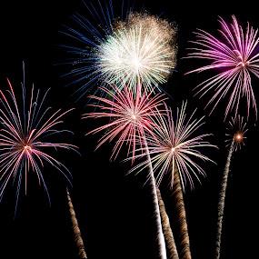 Fireworks 2 by Amanda  Castleman  - Public Holidays July 4th ( lights, fireworks, rockets, celebration,  )
