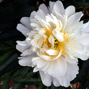 by Vida Jankaitiene - Flowers Flower Gardens (  )