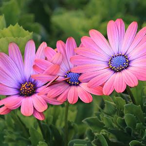 Flower 846~.jpg