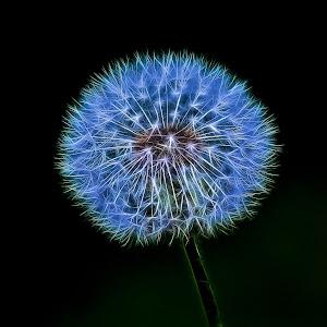 Stylized Dandelion Seeds.jpg