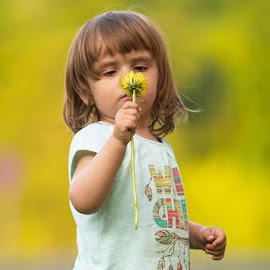 Girl by Michael Eberth - Babies & Children Child Portraits ( girl, portrait, summer, child, kids, flower, dandelion )