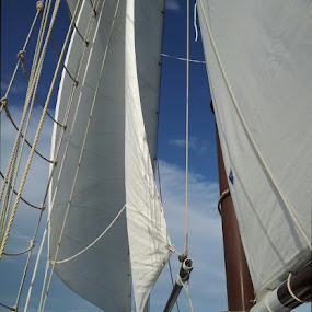 Full Sail by Laurel Rowe - Instagram & Mobile Android ( bay, sailing, florida, st augustine, schooner, masts )