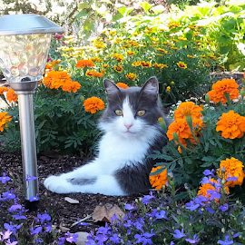 by Nikki Cannella - Animals - Cats Portraits ( #cat #flowers #garden #kitty #relaxing )