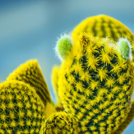 untitled by Dragan Milovanovic - Nature Up Close Other plants