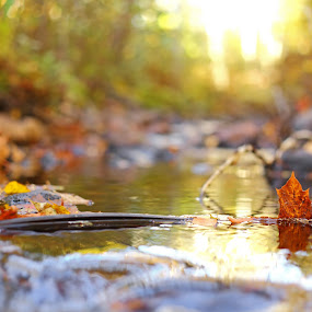 Autumn Leaves In The Creek by Sami Rahkonen - Nature Up Close Leaves & Grasses ( water, autumn leaves, flora, leaf, sunlight, leaves, bokeh, waterstream, close up, sun, close-up, macro, season, nature, autumn, sunset, creek )