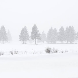 Blizzard by Melissa Connors - Landscapes Weather