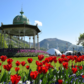 Summery Bergen by Ester Ayerdi - City,  Street & Park  City Parks ( bergen, park, view, flowers, kiosk, city )