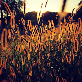 Everyday is a Journey  by Carly Stine - Nature Up Close Leaves & Grasses ( grass, sunset, fall, sunlight, bright colors )