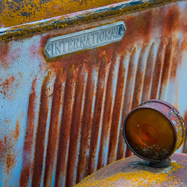International blue farm truck close up with rust and lichen. by Gale Perry - Transportation Other ( yellow lichen, blue, international, farm truck, rust, antique, close up, front end,  )