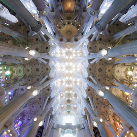 Looking up by Cesare Morganti - Buildings & Architecture Places of Worship ( fisheye, church, architecture, sagrada familia, looking up, barcelona )