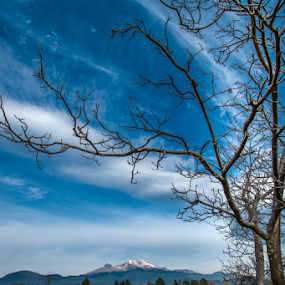 Tree and Iztaccihuatl by Cristobal Garciaferro Rubio - Landscapes Mountains & Hills