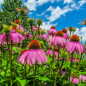 Fiori Rosa Alpenpalace e cielo nw.jpg