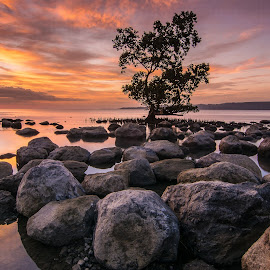 Alone Mangrove by Josh Hutapea - Landscapes Waterscapes
