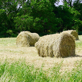Hay! by Debra Branigan - Nature Up Close Gardens & Produce ( grasses, hay, gardens and produce, nature up close, farming, photography )