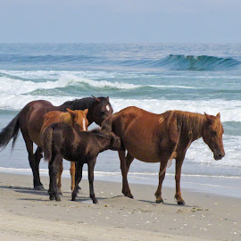 3-1/2 Generation Family Group by Wendy Meehan - Animals Horses ( horses,  )