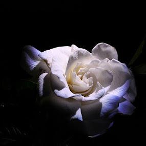 Love me by Ivy Luna - Nature Up Close Flowers - 2011-2013 ( magnolia,  )