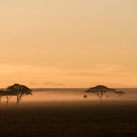 Serengeti Sunrise by Andrew Morgan - Landscapes Travel ( serengeti, sunrise, landscape, tanzania, balloon, colours )