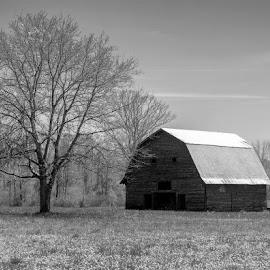 Barn by Lisa Brooks - Landscapes Prairies, Meadows & Fields ( barn )