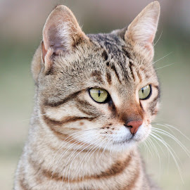 by Amiraldo Ph - Animals - Cats Portraits