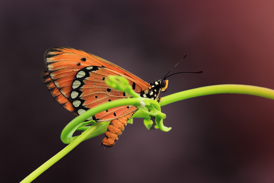 beuaty of butterfly by Said  Ikhsan - Digital Art Things