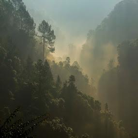 Mystical by Monish Kumar - Nature Up Close Trees & Bushes ( mussoorie, uttaranchal,  )
