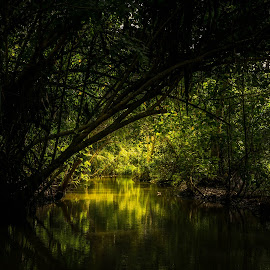 Backlit backwaters by Souvik Biswas - Landscapes Forests ( backwaters, center framing, greens, mangroves, incredible india, south india, shot by nikon, sunlit, travel photography, dslr )