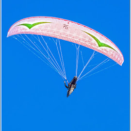the paraglider by Barbara Springer - Sports & Fitness Other Sports ( flying, paragliding, blue sky, no motor, high up, no limit, adrenalin, gliding,  )