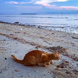 Hunting by Geoffrey Wols - Animals - Cats Portraits ( sand, sunrise, ginger, cat, beach, philippines, water,  )