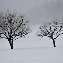 Zima 1 by Bojan Kolman - Nature Up Close Trees & Bushes (  )