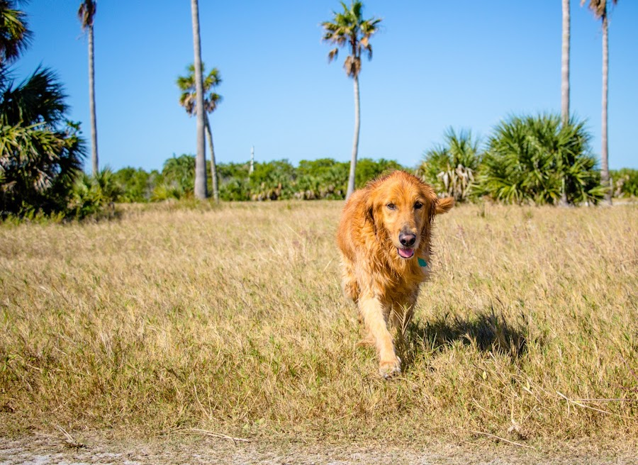 field by Meaghan Browning - Animals - Dogs Running