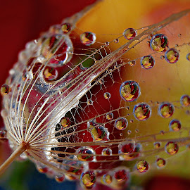Take It Easy by Marija Jilek - Nature Up Close Natural Waterdrops