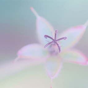 Harmony by Azzeria Photography - Nature Up Close Flowers - 2011-2013 ( pastel, dreamy, 2013, dreams, beautiful, photography, azzeria, macro, sweet, color, the netherlands, harmony, fotograaf, flower, assen )
