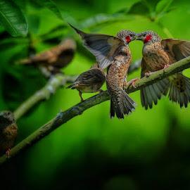 Defending my love  by David Lee - Animals Birds
