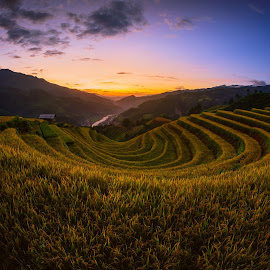 Rice fields on terraced with wooden pavilion at sunset in Mu Can by Nuttawut Uttamaharach - Landscapes Prairies, Meadows & Fields ( plant, curve, mountain, cang, land, thailand, grows, travel, leaf, valley, landscape, asian, farm, nature, indochina, yenbai, asia, sapa, chai, bali, rice, green, pavilion, agriculture, horticulture, mu, vietnam, rough, field, terrace, environment, sunset, food, terraced, earth, river, soil )